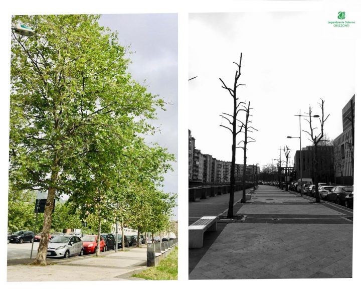 A Salerno ancora appelli inascoltati per salvare gli alberi